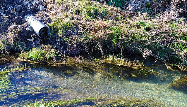 Protecting water quality on livestock farms
