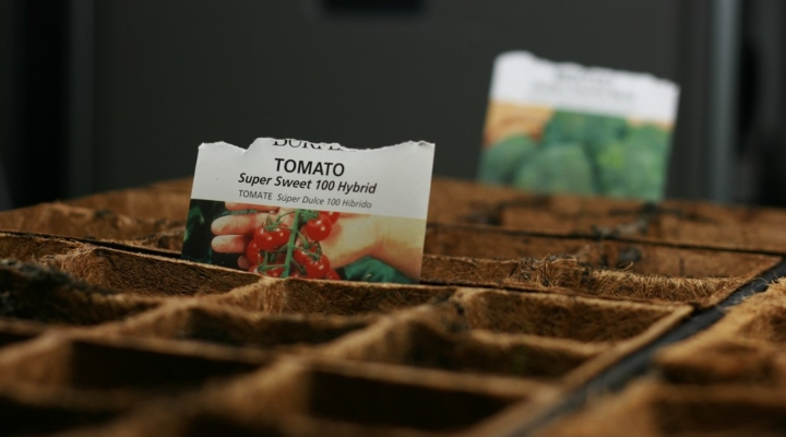 Are your old seeds worth sowing? Test them!