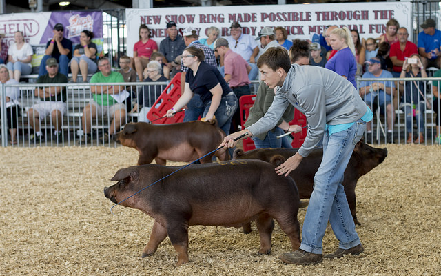 N.C. State Fair Youth Livestock Scholarship information