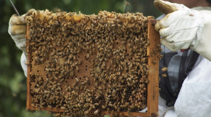 Backyard beekeepers share the buzz