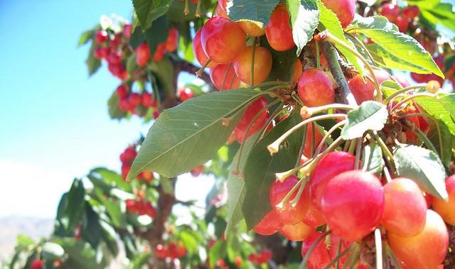 Lawsuits brought against fruit companies