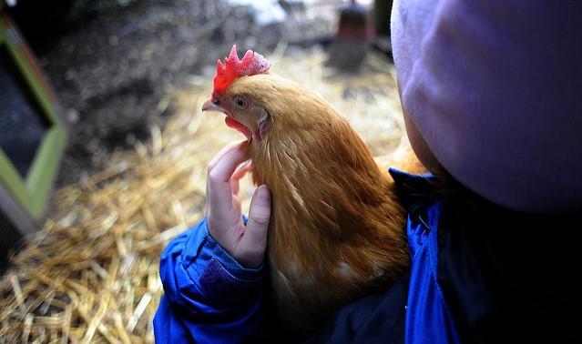 Backyard Poultry workshop planned