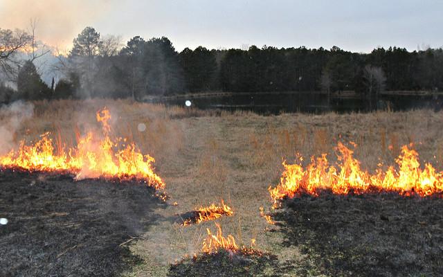 Controlled burn to help reestablish longleaf pine