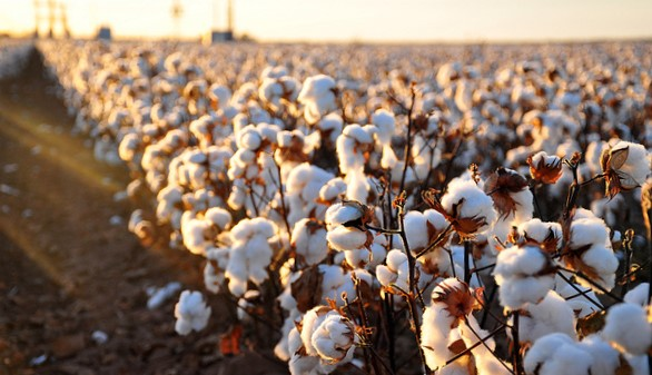 U.S. expected to plant 14.5M acres of cotton in 2019
