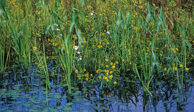 Navigating potential changes to Clean Water Act