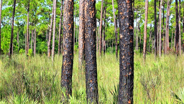 UF hosts international forest health expert