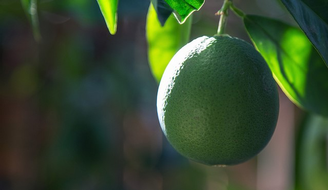 Florida set to receive funds from USDA program