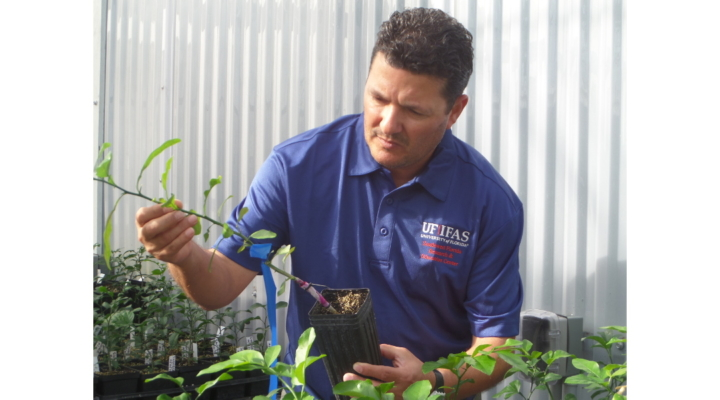 Automated system helps ward off citrus greening