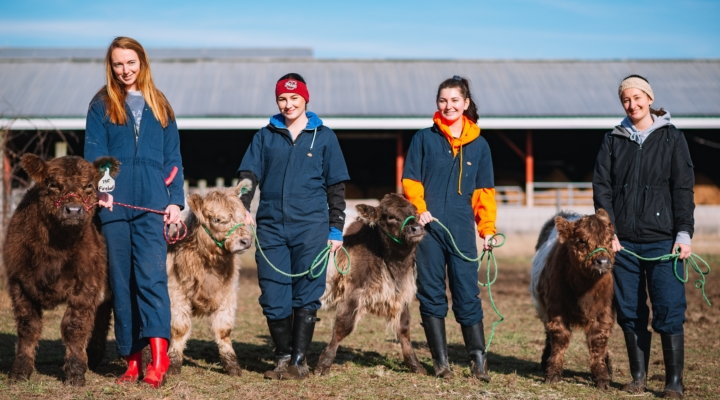 Survey of New England beef farmers closes March 3