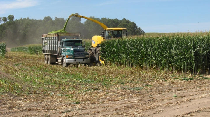 NNYADP has good news with corn silage research