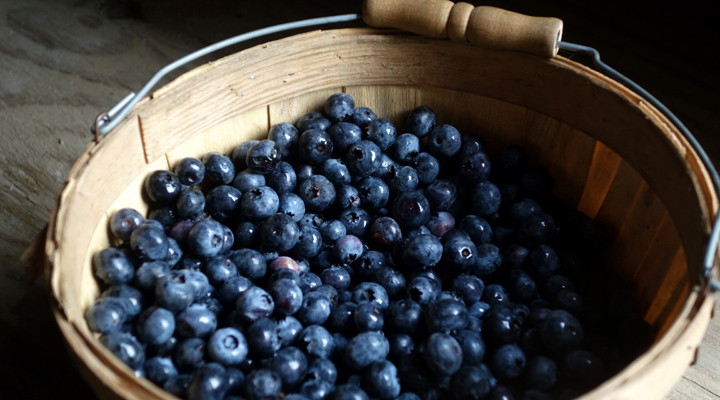 NYS Berry Growers Assoc. March Blueberry Workshops