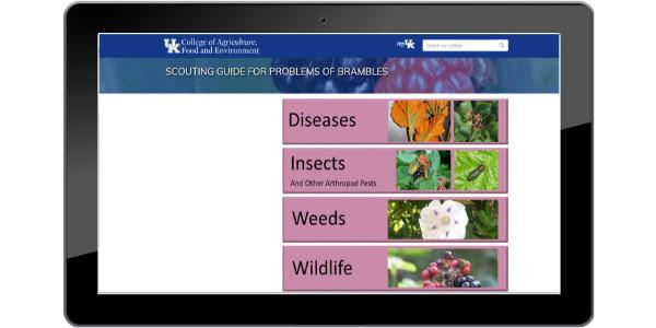 Bramble scout website