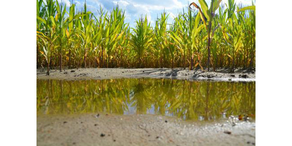 On March 4, 2019, from 7-8 p.m., Michigan State University Extension's Field Crops Webinar – Herbicide Efficacy Under Weather Stress will feature MSU's Erin Burns discussing how weather stress can affect herbicide activity and how to design a program to improve your weed management by planning to buffer weather impacts. (Courtesy of MSU Extension)