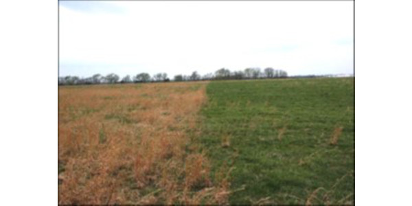 Side-by-side treated and untreated forage. (Courtesy of University of Missouri Extension)