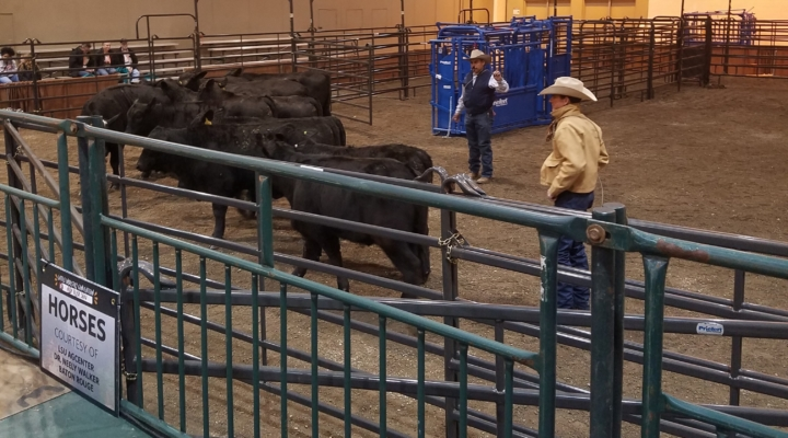 Education takes center stage at Cattlemen's College