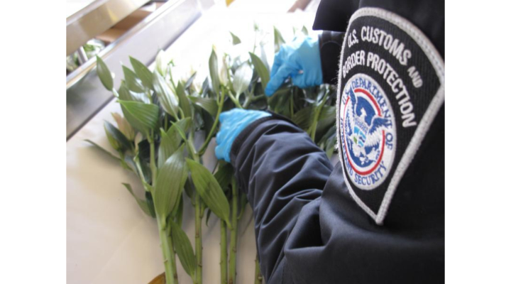 CBP works to keep Valentine's Day flowers pest-free