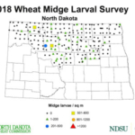 2018 Wheat Midge Larval Survey - Midge Per Square Meter. (Courtesy of NDSU Extension)