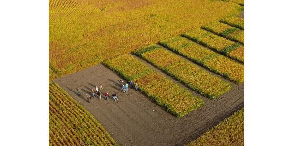 2019 NDSU soybean production meeting set