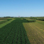 A growing season outlook and a discussion on corn rootworm management will highlight the annual meeting of the North Central Iowa Research Association, March 6.