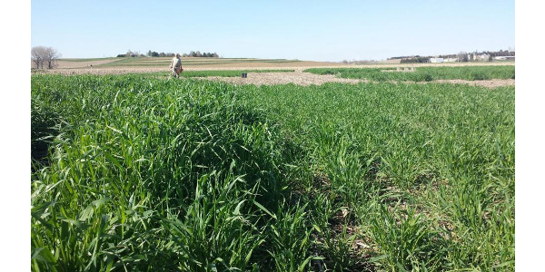 From seeding to innovative methods to incorporate cover crops to grazing options, the Central Nebraska Cover Crops Conference offers the latest information to help Nebraska growers profitably incorporate cover crops into their operation. (Courtesy of UNL)