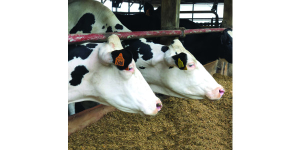 A one-day workshop will feature leading cow behavior and animal welfare experts and provide dairy farmers and allied industry with new perspectives on how to help farms better meet the health and behavioral needs of top-performing dairy cows. (Courtesy of PDPW)