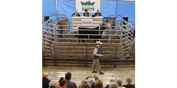 The Illinois Performance Tested (IPT) Bull Sale kicked off the 2019 Illinois Beef Expo, held Feb. 21 at the Illinois State Fairgrounds in Springfield. (Courtesy of University of Illinois)