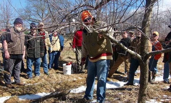 Piscataquis Fruit Tree Pruning Workshop
