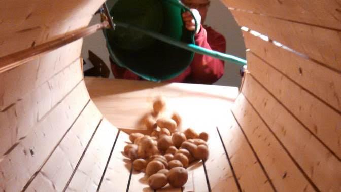 Professional development for veg & fruit growers