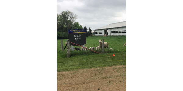 The SDSU Sheep Unit hosts a lambing time open house February 21 from 12:30 p.m. to 4 p.m. The SDSU Sheep Unit is located 1.5 miles north of the South Dakota State University campus on Medary Avenue (3729 Medary Ave). (Courtesy of SDSU Extension)