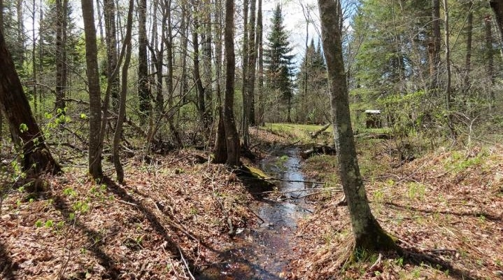 Nitrogen's path affects more forests than suspected