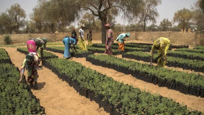 UN declares Decade on Ecosystem Restoration