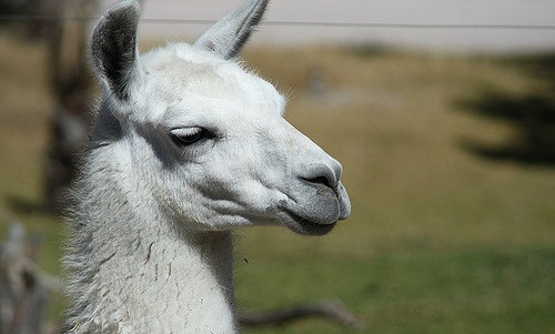 Llama & Alpaca Parasite Management Workshop