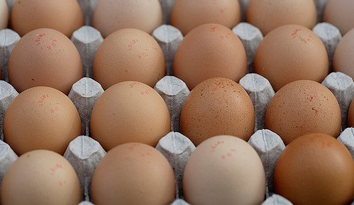 Members appointed to American Egg Board