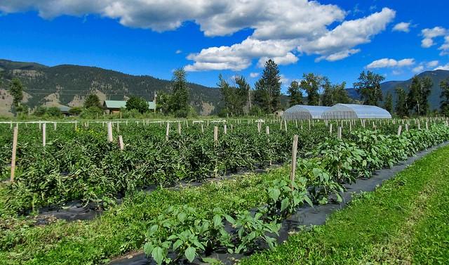 vegetable farm produce (USDA NRCS Montana, Public Domain)