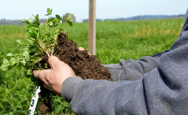 General Mills to advance regenerative agriculture