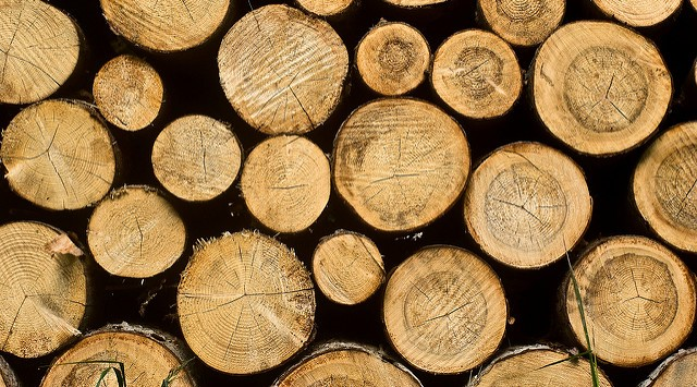 Maine looks to get teenagers involved in logging