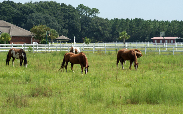 Pasco Extension: 'spring cleaning' pasture health improvement