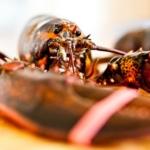 lobster (Tom Thai, Flickr/Creative Commons)