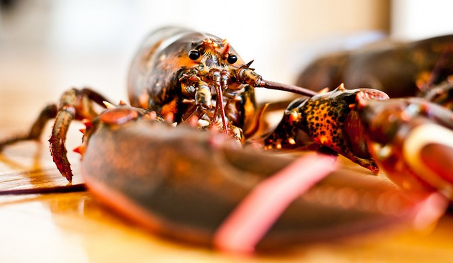 lobster (Tom Thai, Flickr/Creative Commons)
