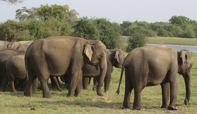 China to grow crops for elephants to spare farmers