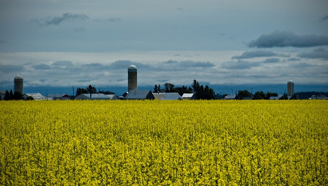 Canadian officials to testify on canola issue