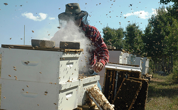 DEP needs stronger pesticide rule to protect bees | Morning
