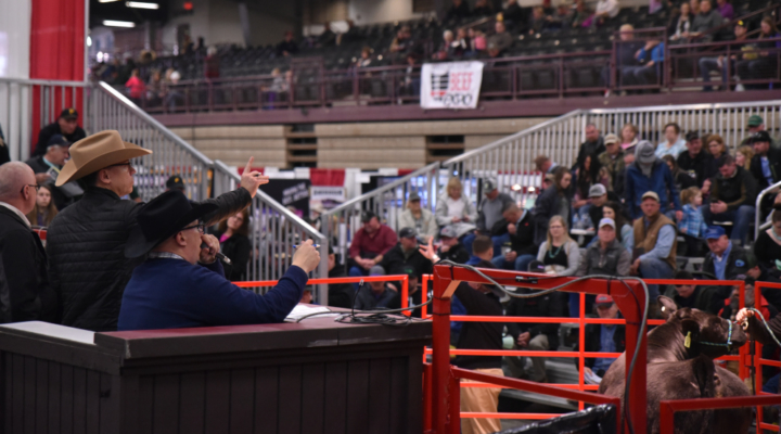 Ohio Beef Expo hosts successful sales