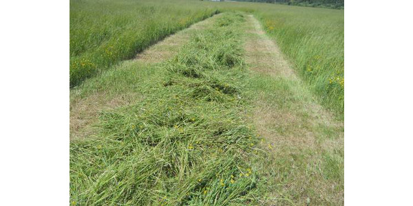 Forage production is all about two things: quality and tonnage. (Photo by Jim Isleib, MSU Extension)