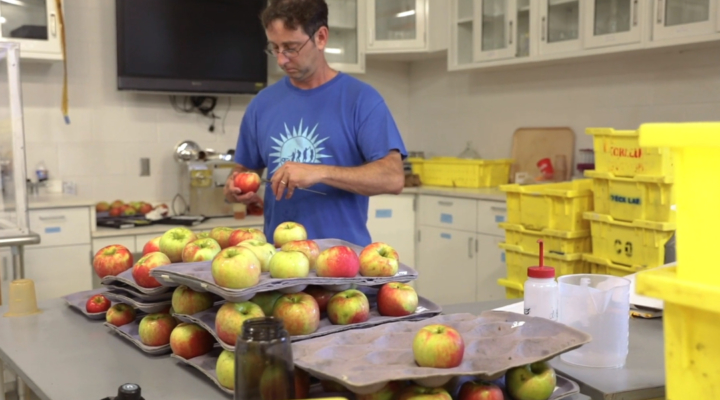 NYS apple industry has larger economic impact