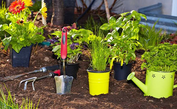 Middlesex gardening classes taking place in March