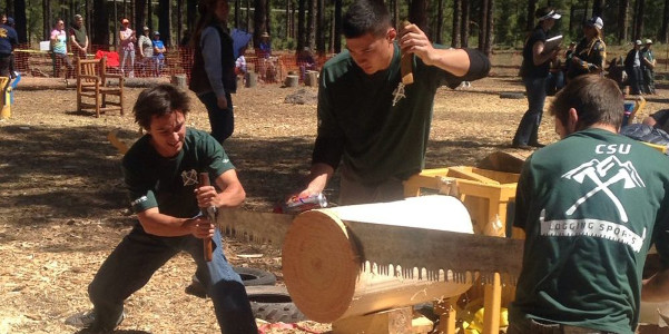 Galen Burr, president of CSU's logging sports club, teams with former president Ethan Doyle, right, in the double buck saw event. (Courtesy of CSU)