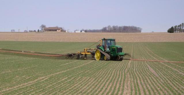 Topdressing wheat with liquid swine manure