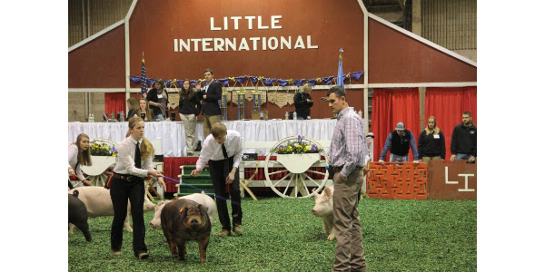 96th Little International March 29-30, 2019 | Morning Ag Clips
