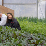 Ronald and Sonya Antonini, owners of The Salad Farm in Bolivar, Missouri, grow and market their fruits and vegetables. (Courtesy of Missouri Department of Agriculture)